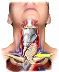 Metode naturale de reglare a functiei tiroidiene