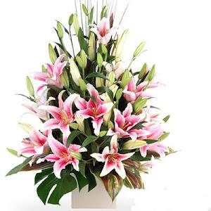 Bunga Segar Special