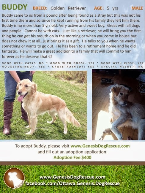 Genesis Dog Rescue Adoptables