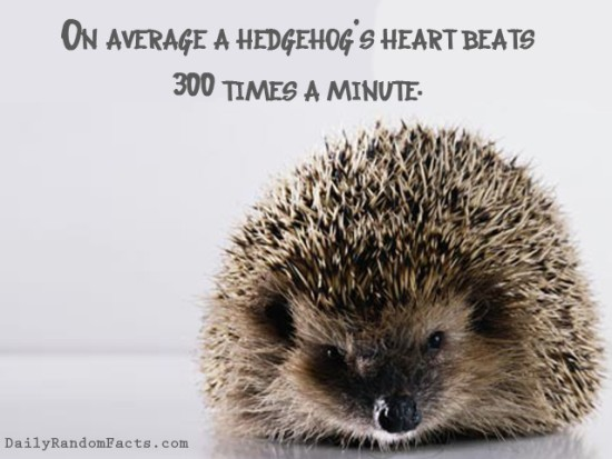 animal facts, facts about animals, interesting animal facts, hedgehogs fact