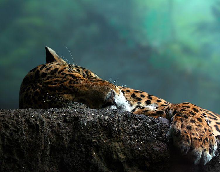 Красивое фото леопарда
