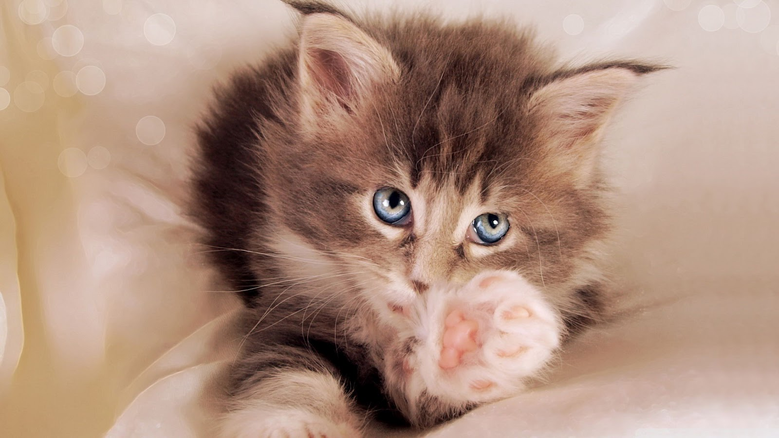 Cute+cats+theme+wallpapers+1920x1080+(13).jpeg