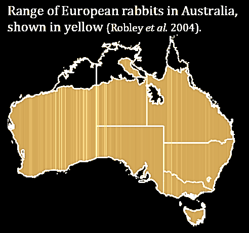 rabbit infestation in australia I think the infestation of rabbit in australia is too much important not to have at least a bit in the main article if there is a rabbits in australia page.