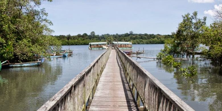 Obyek Wisata Mangrove di Banyuwangi
