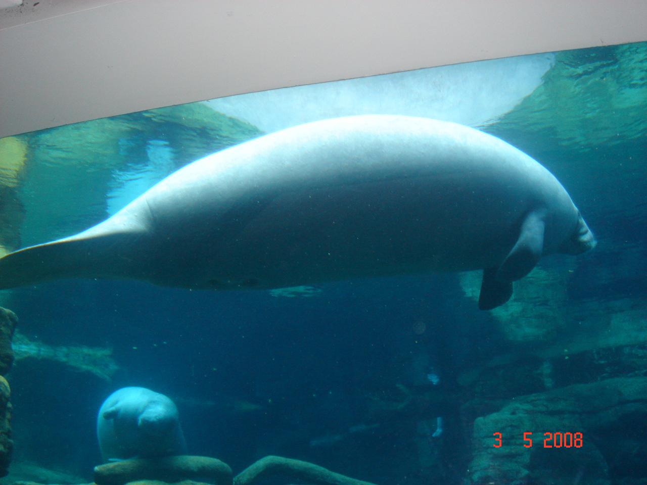 Marine Animal at Sea World in Orlando
