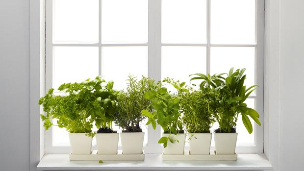 Indoor Window Box Herb Garden Fabulous Phenomenal Indoor Herb