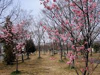 桃花園 ふれあい緑道入口