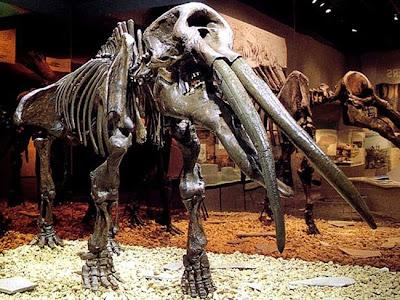 Saiba como se determina a idade de um fóssil