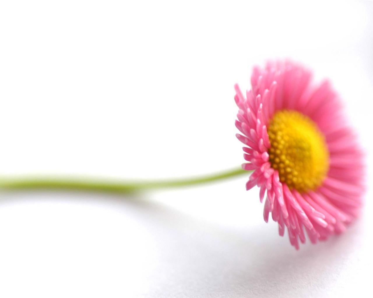 flowers for flower lovers.: Beautiful Flowers desktop ...
