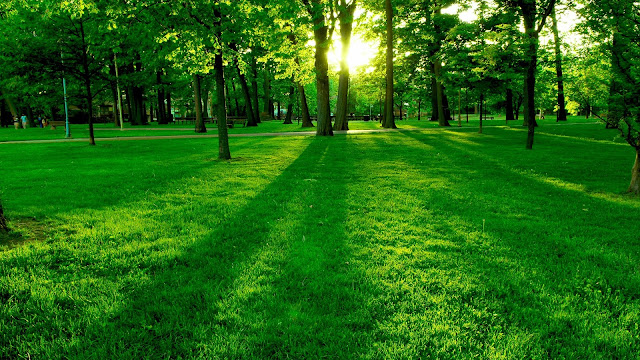 Park The Morning Sun The Green Trees And Grass HD Wallpaper