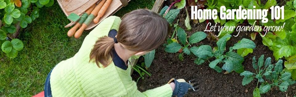 Home Gardening 101