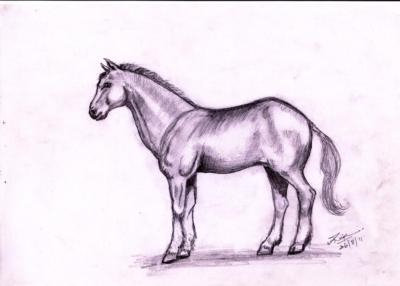 rajesh doodles: Horse and Jaguar
