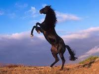 Horse Problem