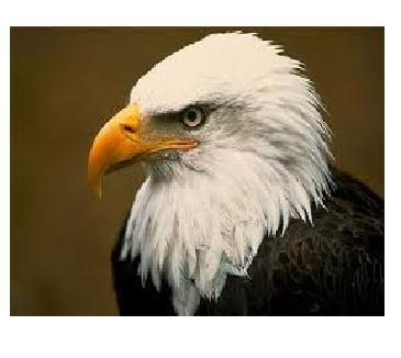... Mendeskripsikan Ciri-ciri Paruh Burung Berdasarkan