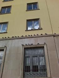 Las palomas también tienen su área de descanso