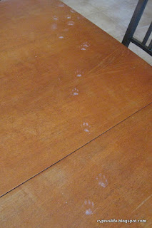 Paw prints from our naughty kittens, evidence that they were on the table