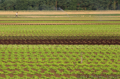 campagne champs maraicher culture Chailly en Bière Seine et Marne