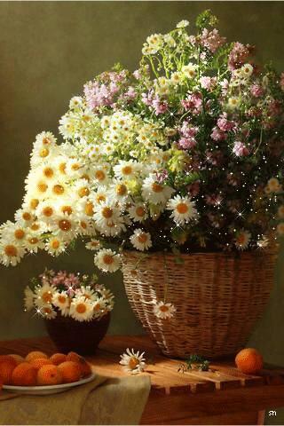 Flores para você..