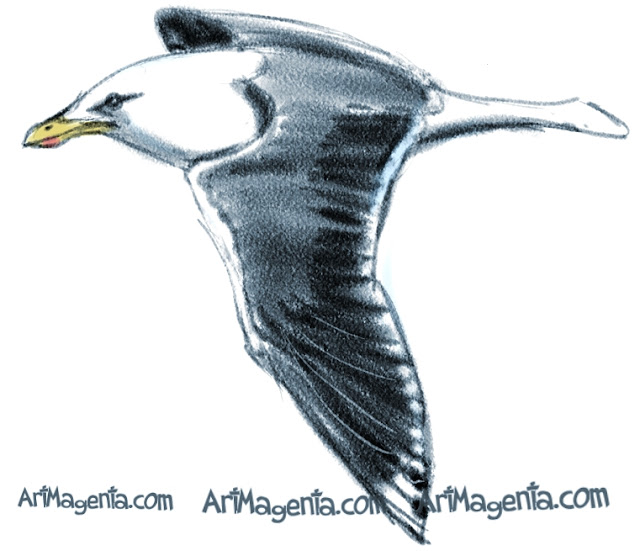 Lesser Black-backed Gull sketch painting. Bird art drawing by illustrator Artmagenta