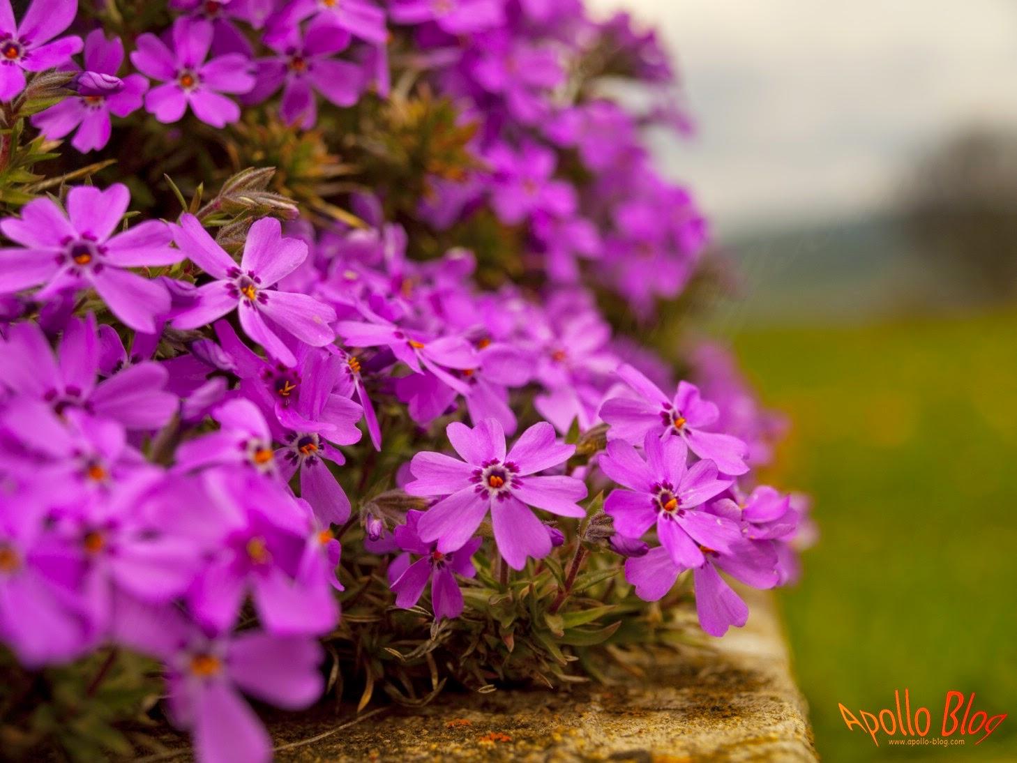 Flori macro