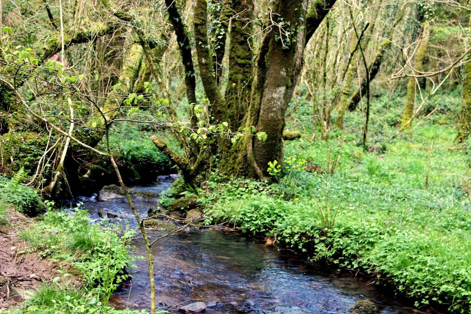 wild stream in woods