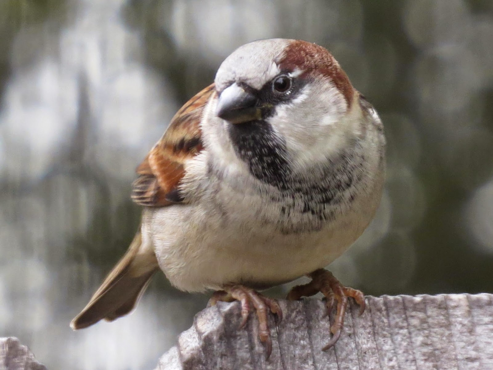 Se texas birding wildlife watching november 2014 there is a birdhouse on the wall of our garden shed right opposite our main living room window the other day i was excited to catch a glimpse of movement thecheapjerseys Image collections