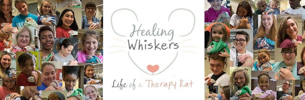 Healing Whiskers