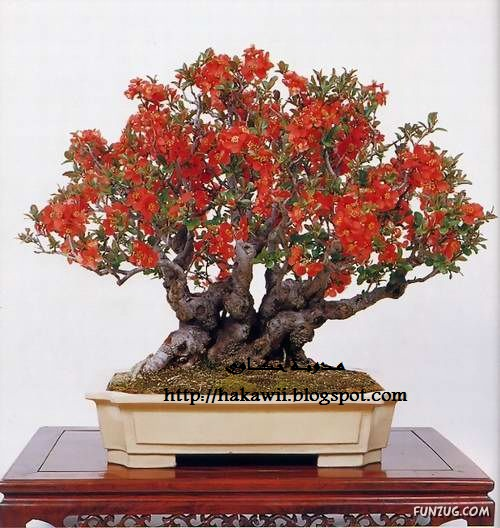 Summit of artistic creation in japanese culture for Most expensive bonsai tree ever