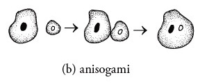 anisogami