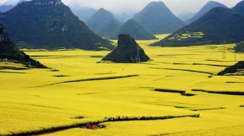 Menakjubkan Terbentang Luas Lautan Bunga Spektakuler di China