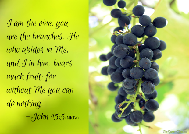 I am the vine you are the branches...abide in me bear much fruit! John 15:5