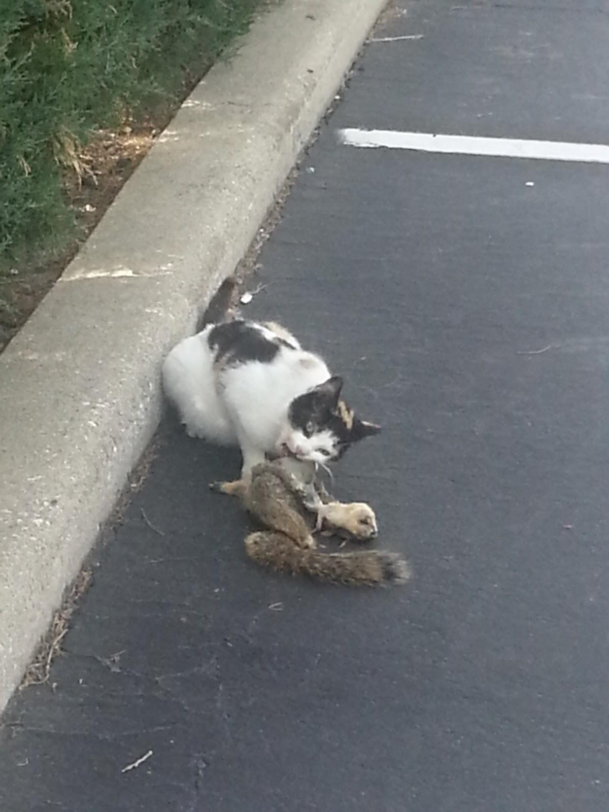 Porcupine Stew Cat Vs Squirrel