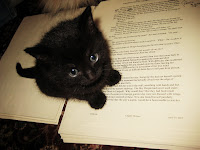 Cute black kitten on manuscript - belongs to Anne Elisabeth