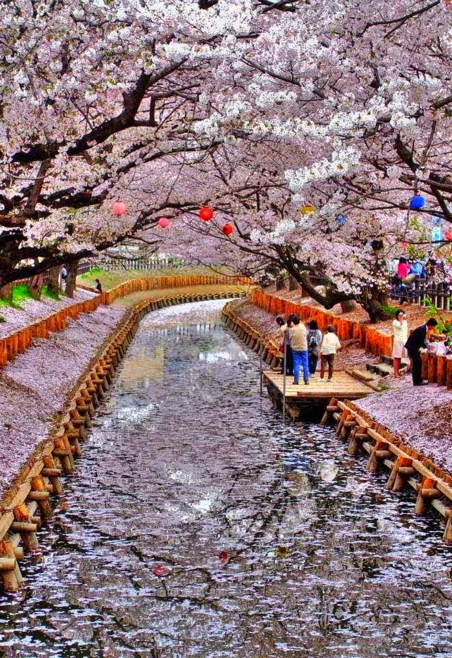 Top 5 Best Place To Visit In Japan
