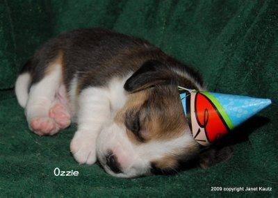 puppy_birthday_hat.JPG