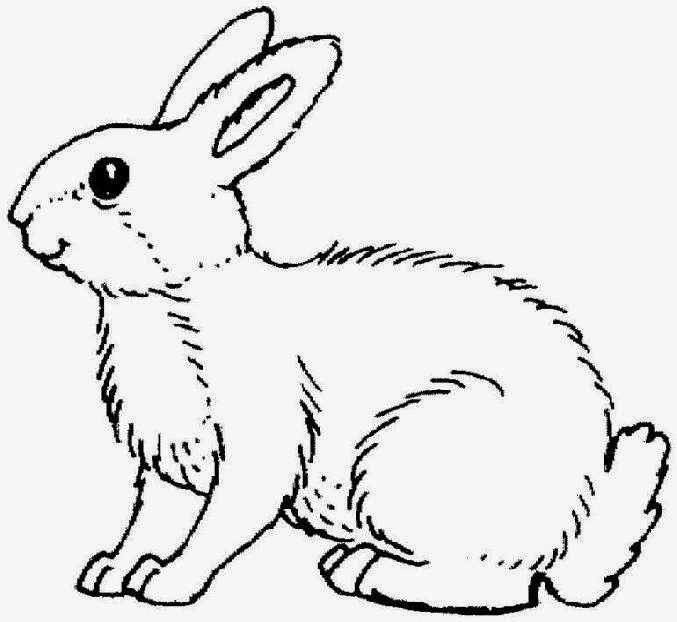 Rabbit Coloring Pages 1080p
