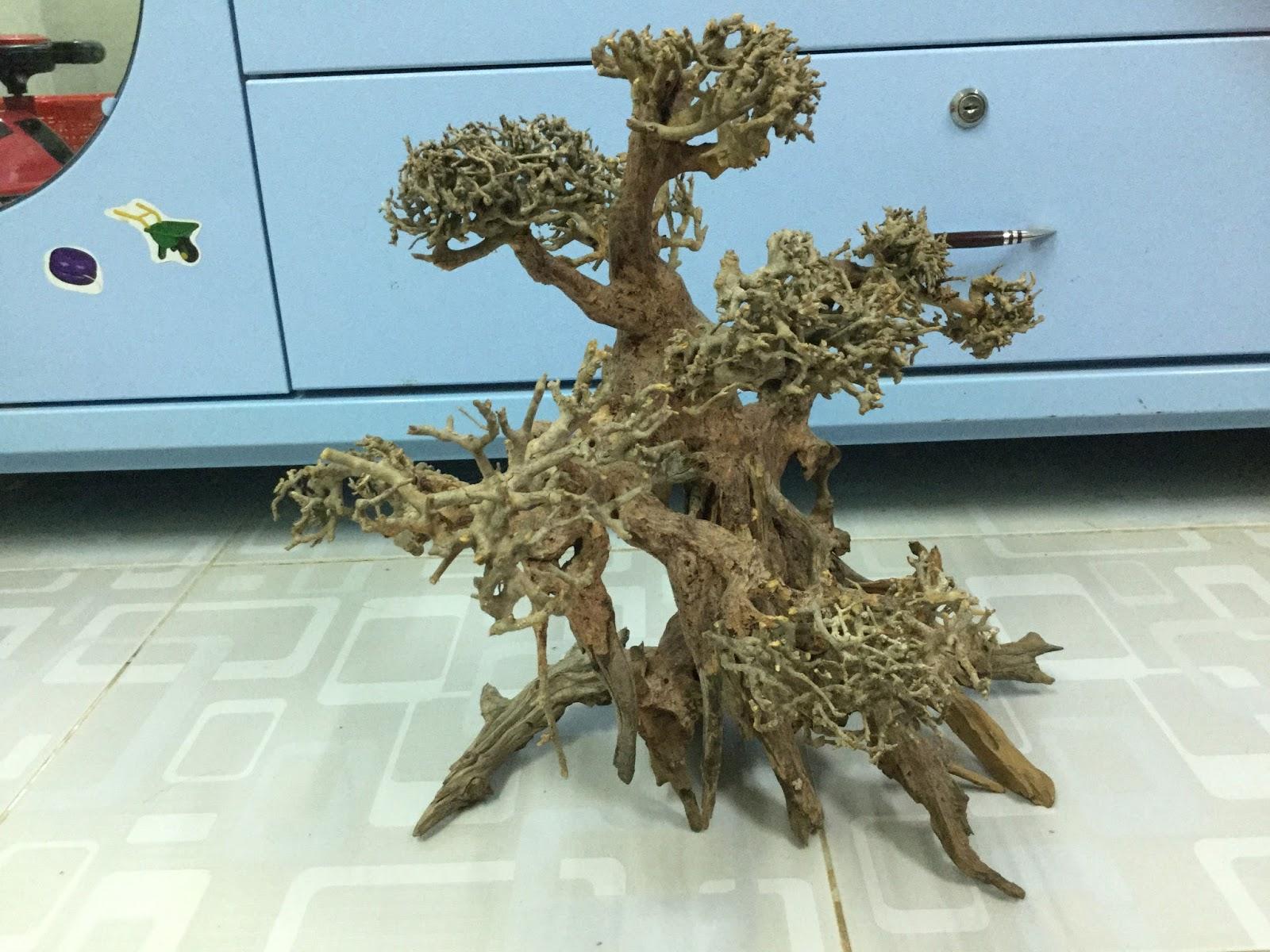 lũa bonsai thủy sinh đẹp nhìn từ nhiều phía