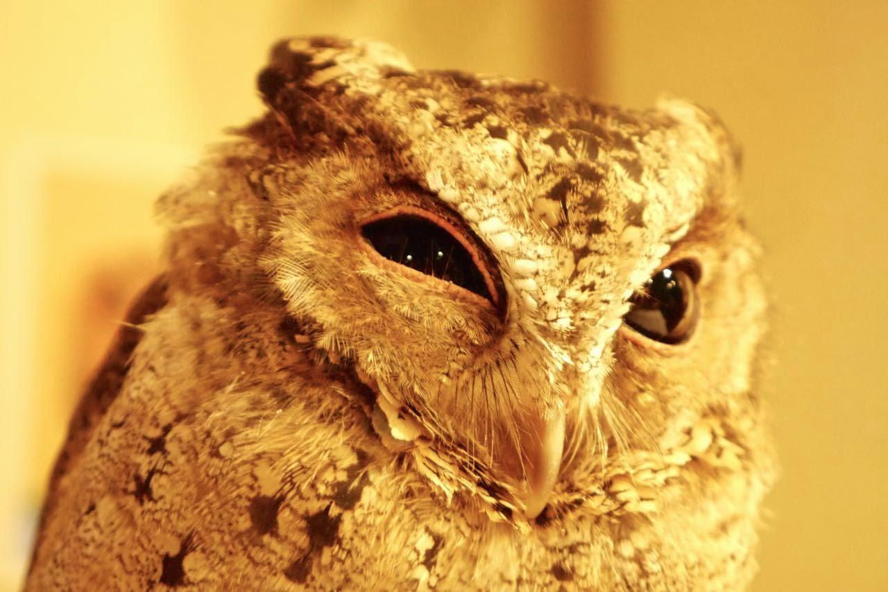 Owl Cafe フクロウカフェ