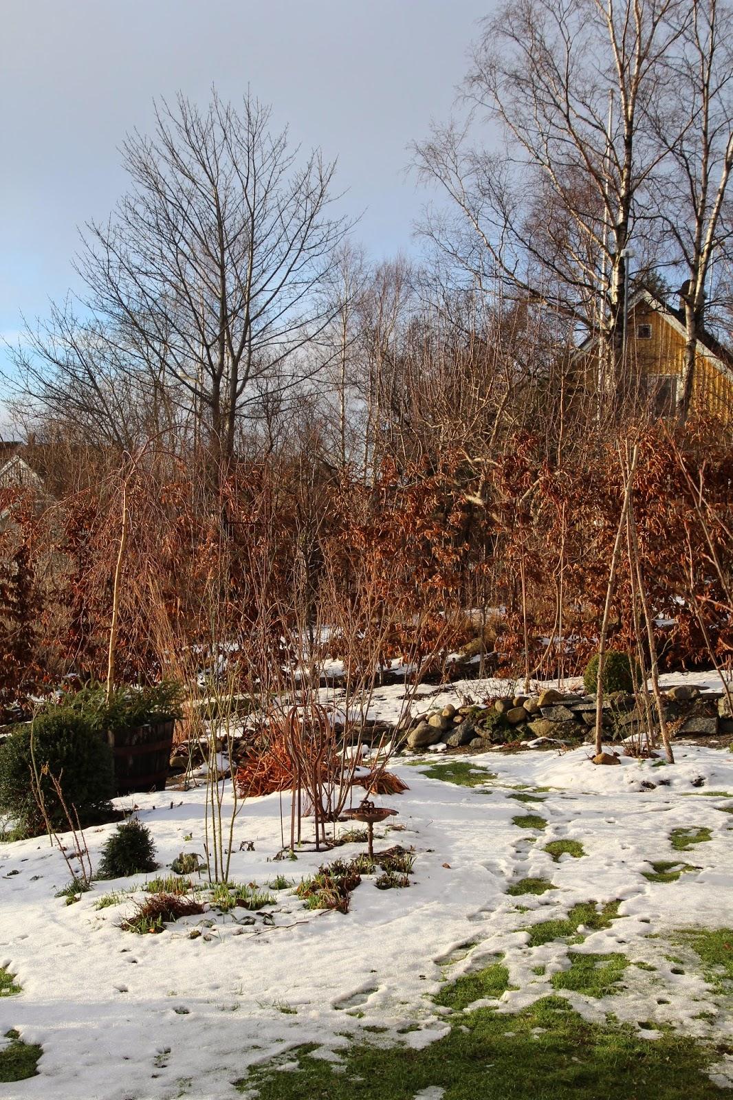 vårtecken trädgårdsblogg