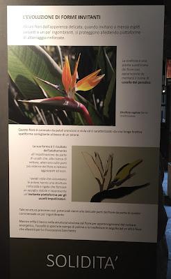 Examples of the information in the exhibit Seduzione Repulsione