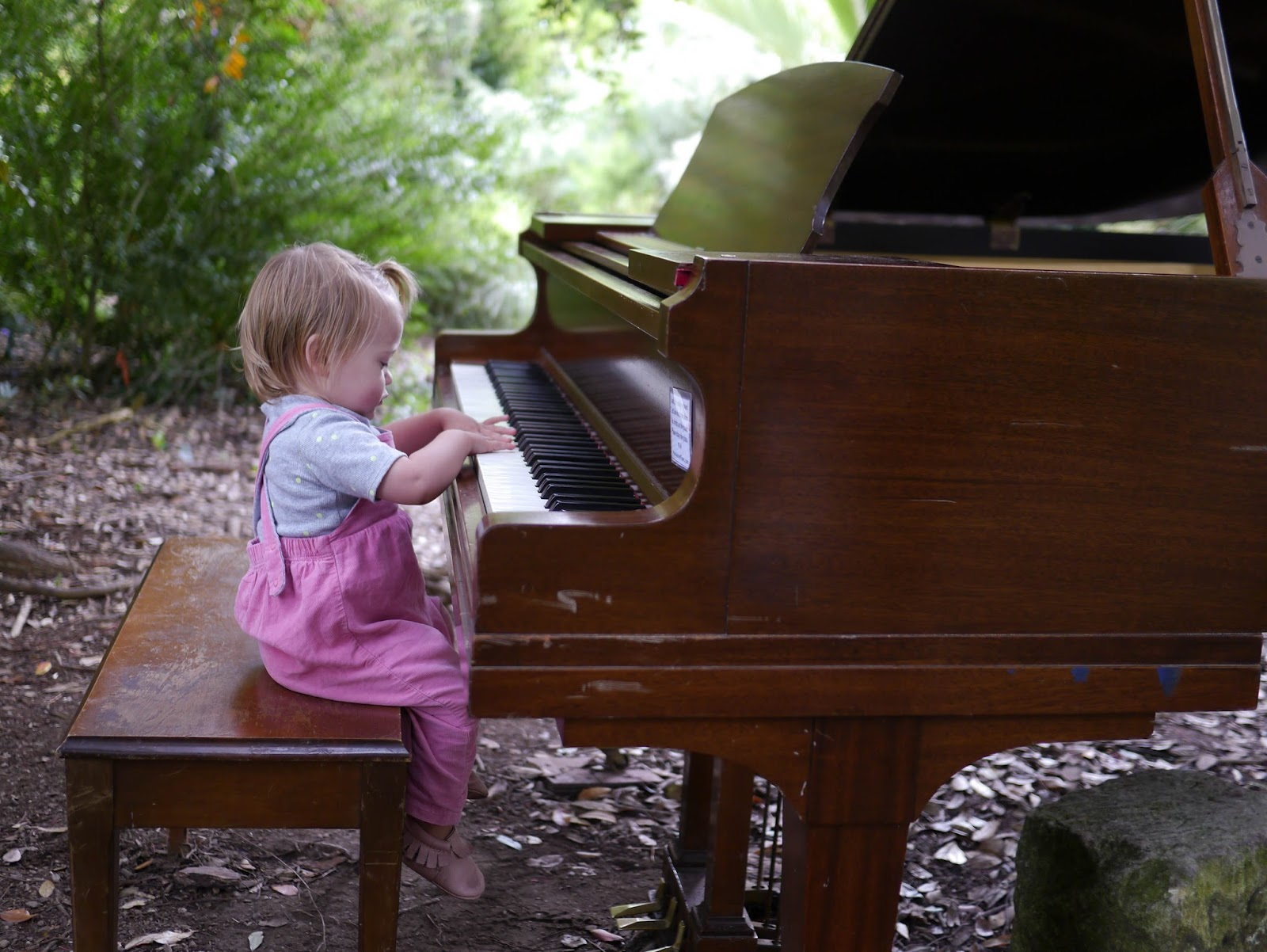 Little Hiccups Flower Piano At San Francisco Botanical Gardens