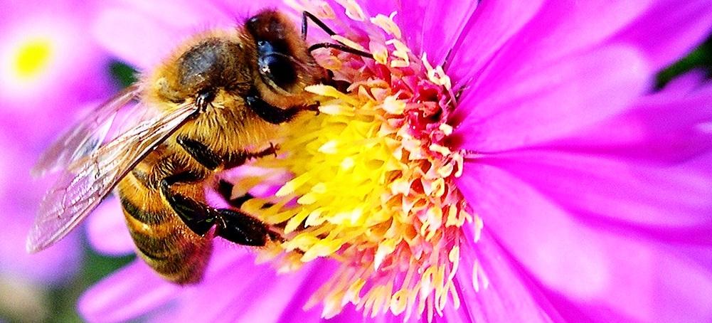 le miel pour claircir ses cheveux naturellement - Claircir Ses Cheveux Colors