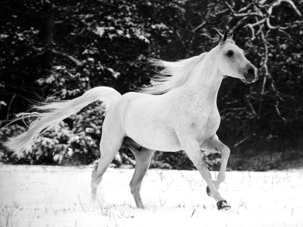 http://1.bp.blogspot.com/-gBpCmcW3h5A/TdEFmOl5eLI/AAAAAAAAATU/7Bwk8Aq1_jY/s1600/White-Stallion.jpg