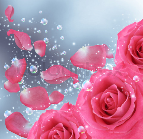 Best Rose Wallpapers ~ Pinky's World Of Creation