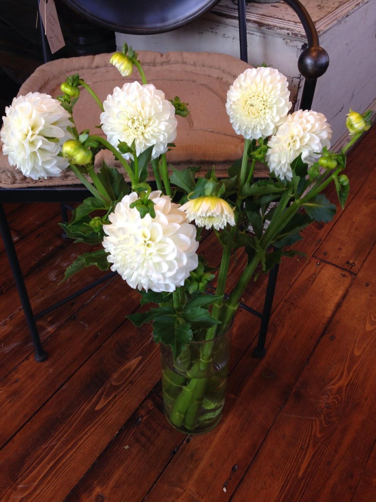 flower of the week : les fleurs : andover florist : dahlia : white