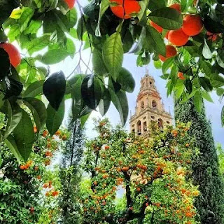 La Torre-Campanario de la Mezquita de Córdoba entre los naranjos