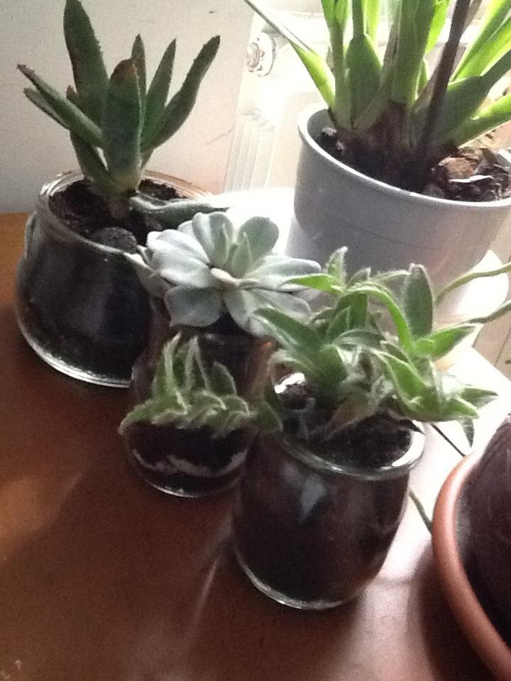 Ho fatto il composto riciclo di composto vasetti di for Composizione di piante grasse in grande vaso