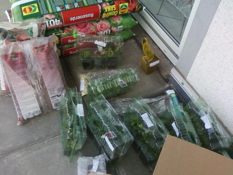 Terrassen und balkonbepflanzung es ist soweit ich for Wo pflanzen bestellen