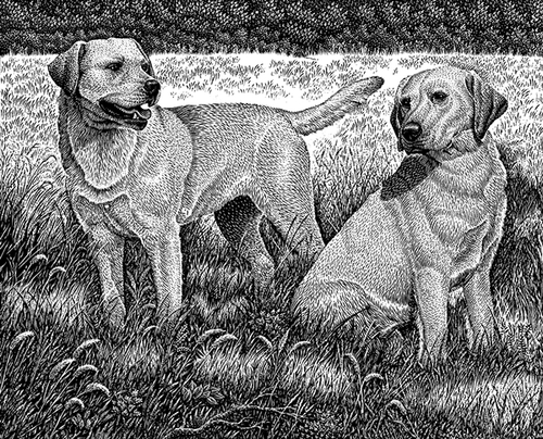17-Golden-Labs-Michael-Halbert-Scratchboard-Images-of-Animals-and-Architecture-www-designstack-co