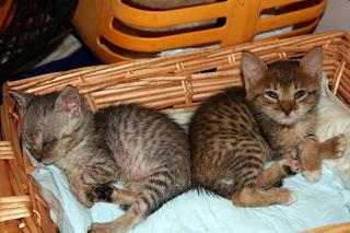 Io amo firenze novembre 2011 - Gattile bagno a ripoli firenze ...